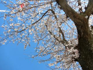 春が来た~✨🌸