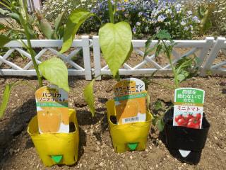 ✨🌱夏野菜の苗植え🌱✨